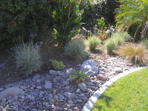 Drought resistant landscaping ideas redhotpoker plant for Drought resistant landscaping